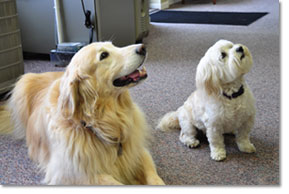 Image Of Two Dogs Laying On Carpet In Showroom Of HVAC Livonia -  D & G Heating & Cooling, Inc.